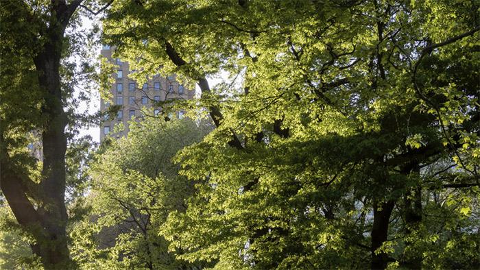 La ville-forêt - vers une nouvelle culture urbaine | Ville ...